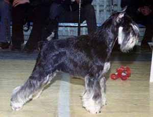 http://gloris.ru/photos/dogs/638/Zhut.jpg